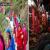 इंटरनेट से पुरे भारत में प्रसिद्ध हुआ सिमसा माता मंदिर, कई राज्यों से नि:संतान महिलाएं पहुंची